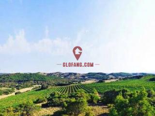 独特的西班牙红酒文化,让你感受西班牙似火的风情