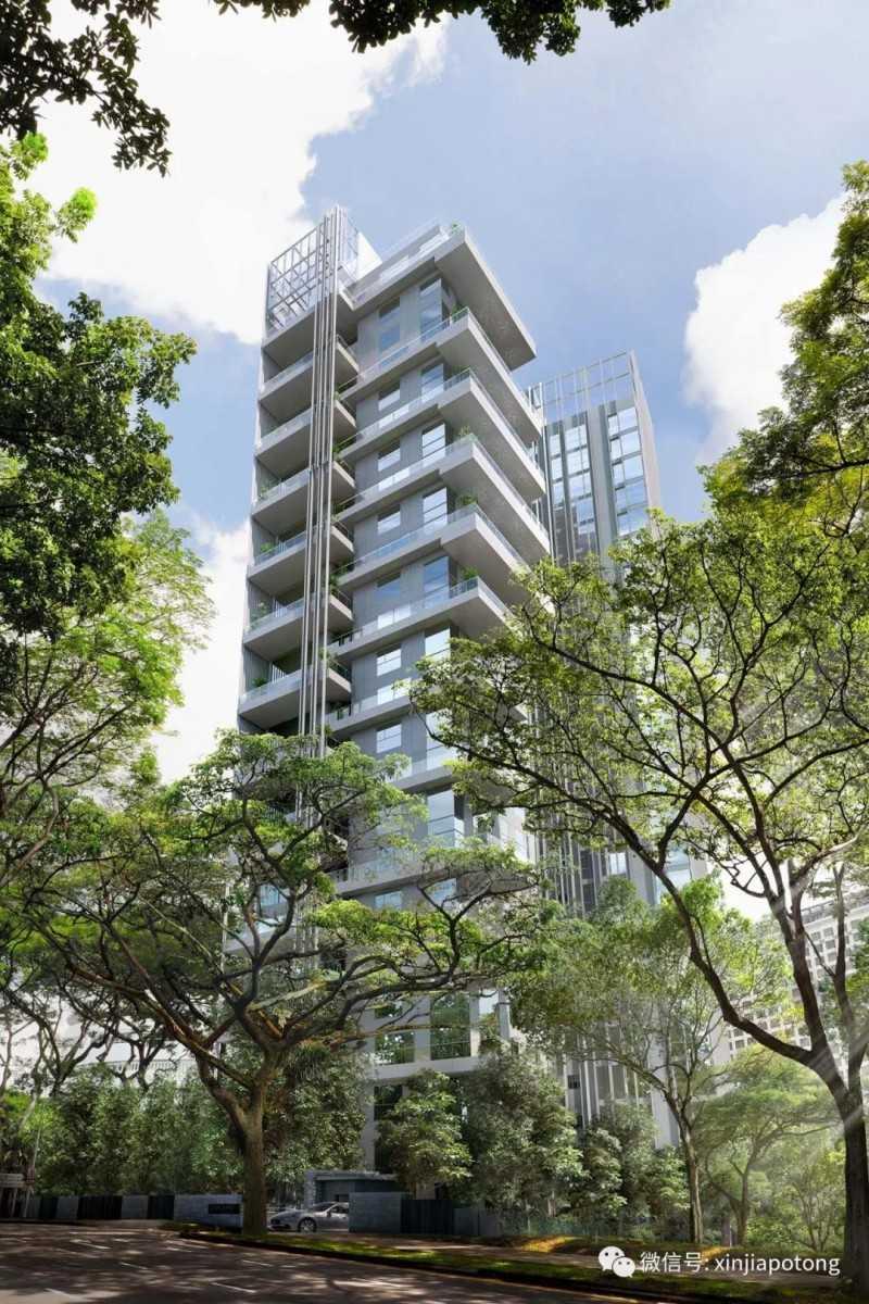 新加坡第10邮区豪宅项目,乌节三翠林