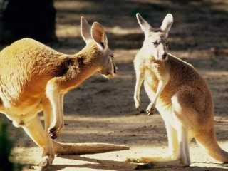 早知如此,当初就不买澳洲房子了,现在算算真的太亏了!