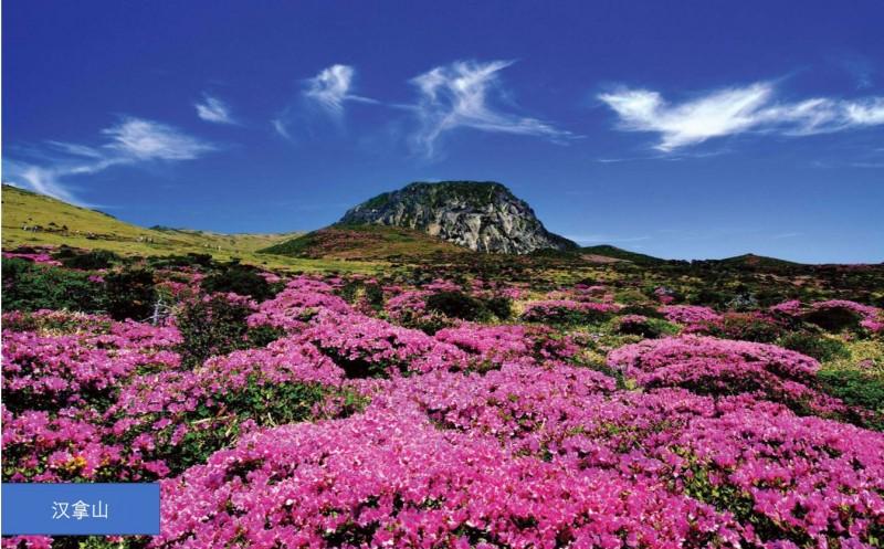 韩国济州岛别墅,编号28110