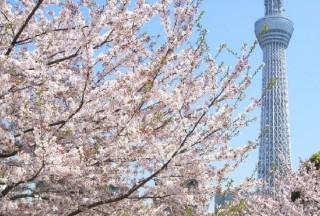 """拥有""""东京天空树""""的日本东京都墨田区房价多少钱一平米?"""