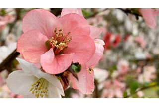 不身临其境,怎知樱花之美