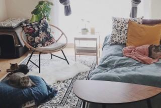日本东京一室一厅单身公寓的租金是多少?